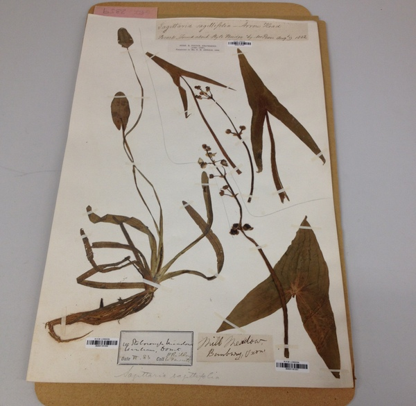 Botanical specimen dated 1822, Natural History Museum