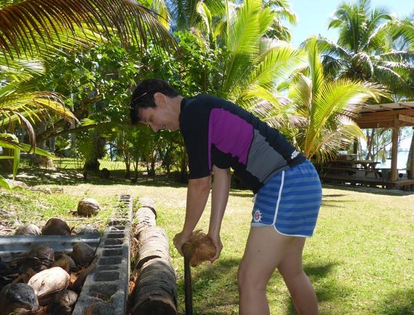 Coconut husking at Vaikoa, Aitutaki