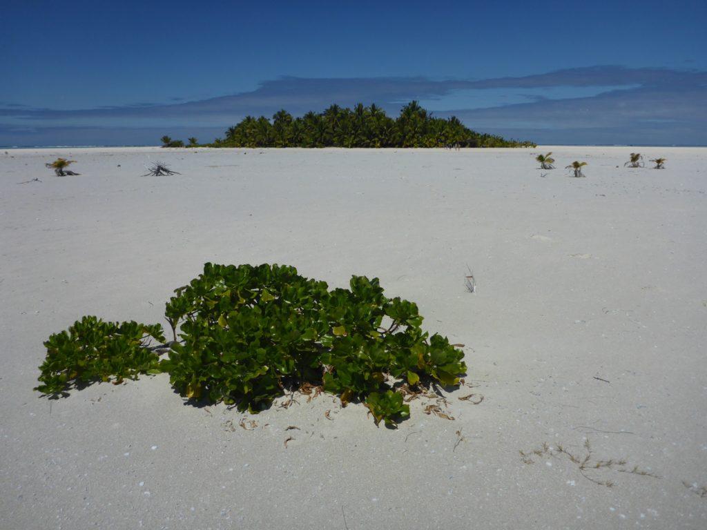 A real desert isalnd: Maini, Aitutaki lagoon