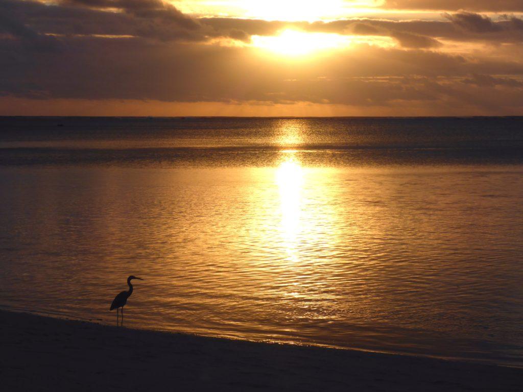 Reef heron at sunset, Amuri beach (Matriki, Aitutaki)